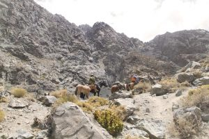 pionier-trail-7850