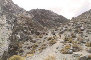 pionier-trail-7851