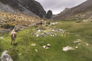 pionier-trail-7962