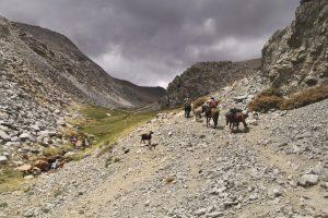 pionier-trail-7988