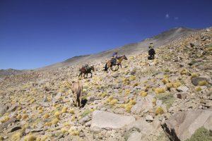 pionier-trail-8042