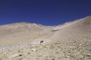 pionier-trail-8063