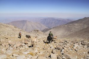 pionier-trail-8122