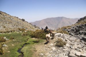 pionier-trail-8189