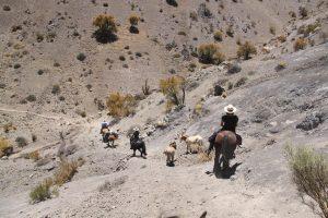 summit-trail-6978