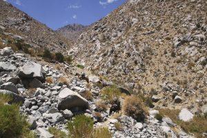 summit-trail-7121